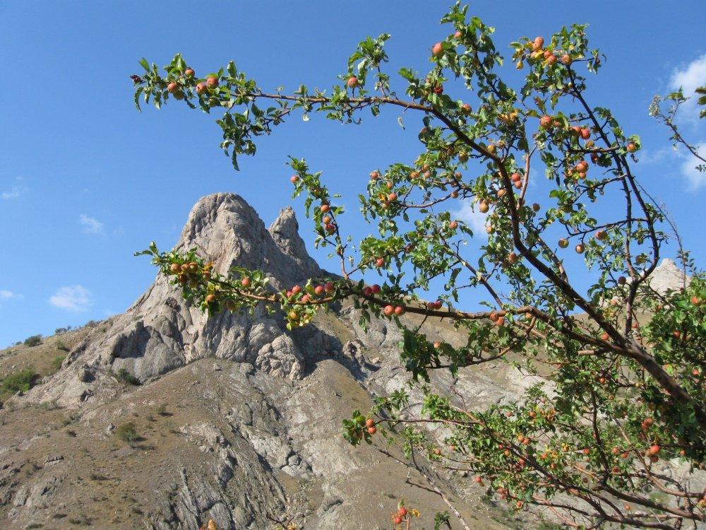 Местные скалы в Зеленогорье