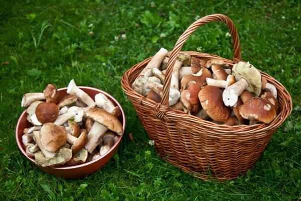 Топ-5 урожайных поселков, где можно собрать грибы в Крыму