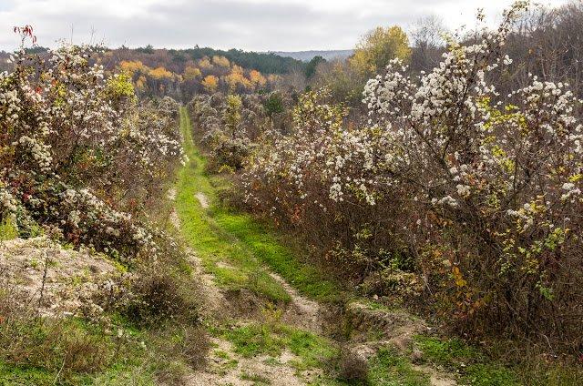 Село Терновка — уютно, красиво и есть что посмотреть