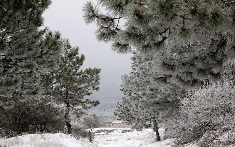 Зимняя сказка в лесу